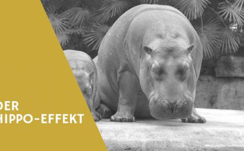 HIPPO-Effekt